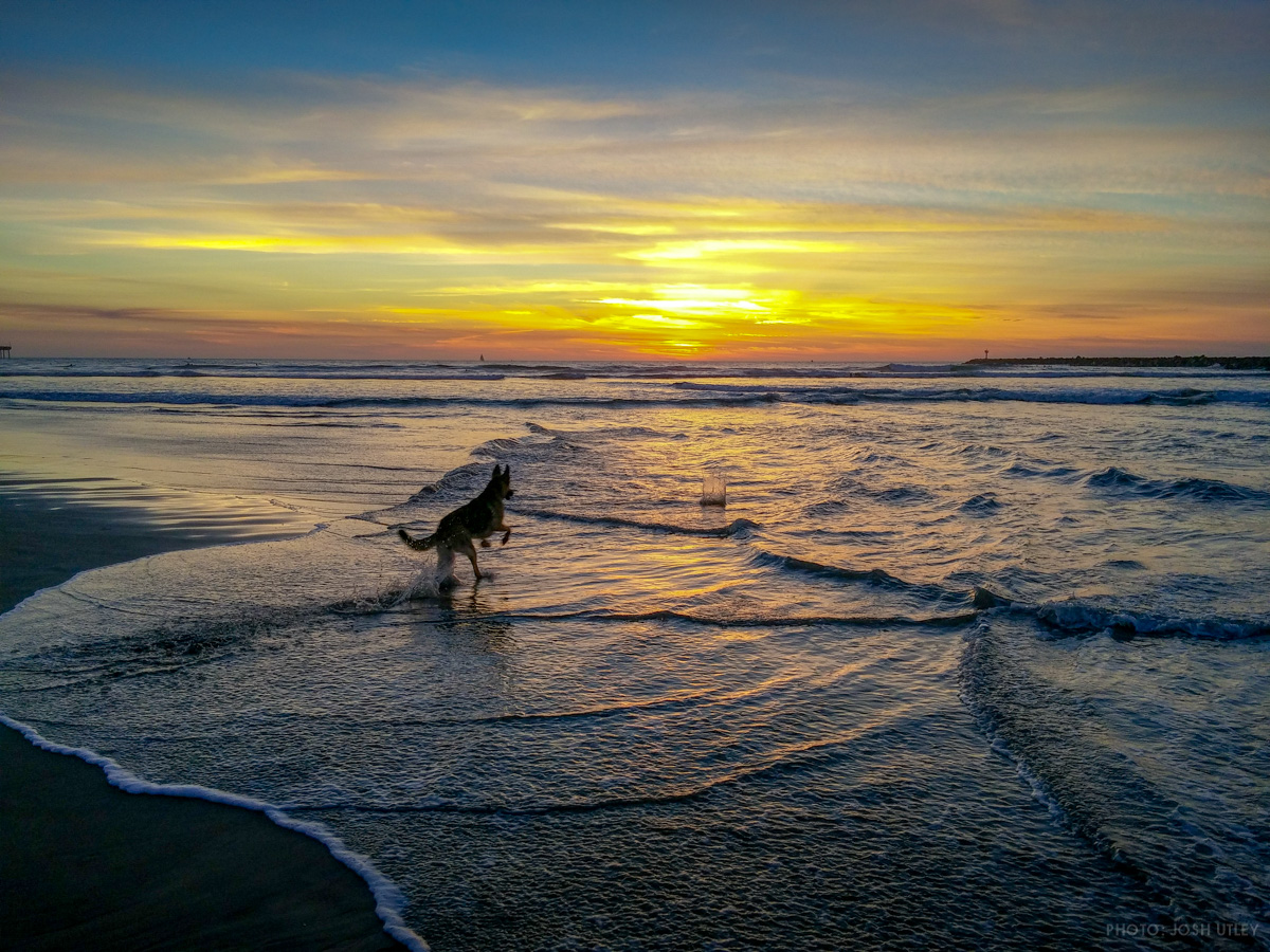 Dog fetching their ball during sunset