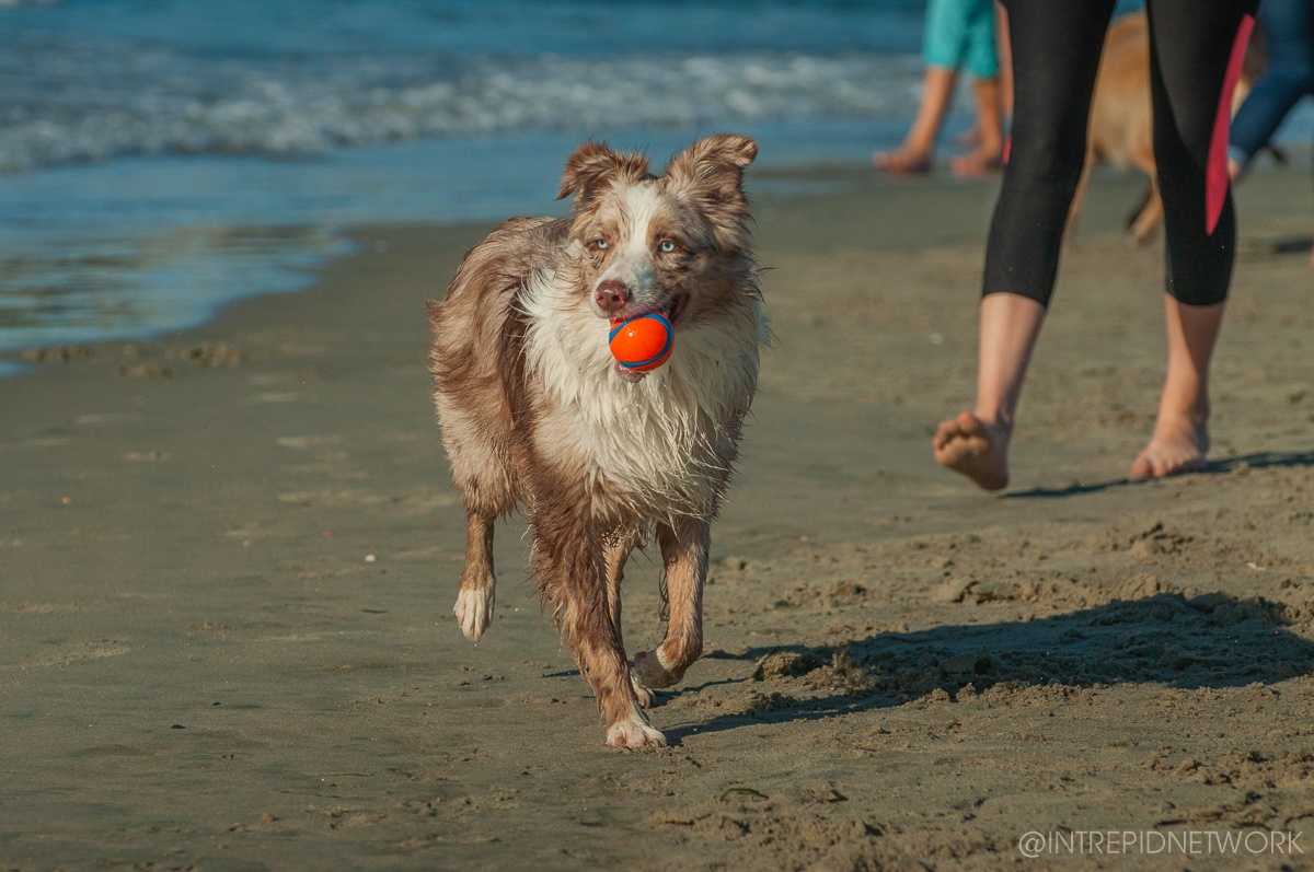 Pet's of Dog Beach San Diego